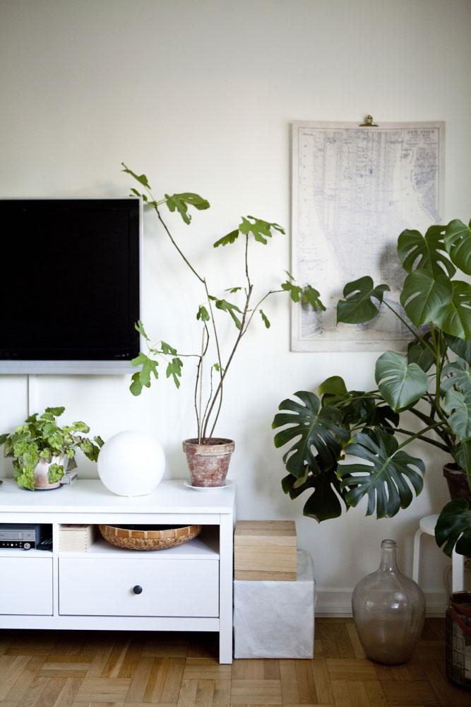 IKEA: Planter inne gir bedre luft og mer trivsel. (Foto: IKEA)